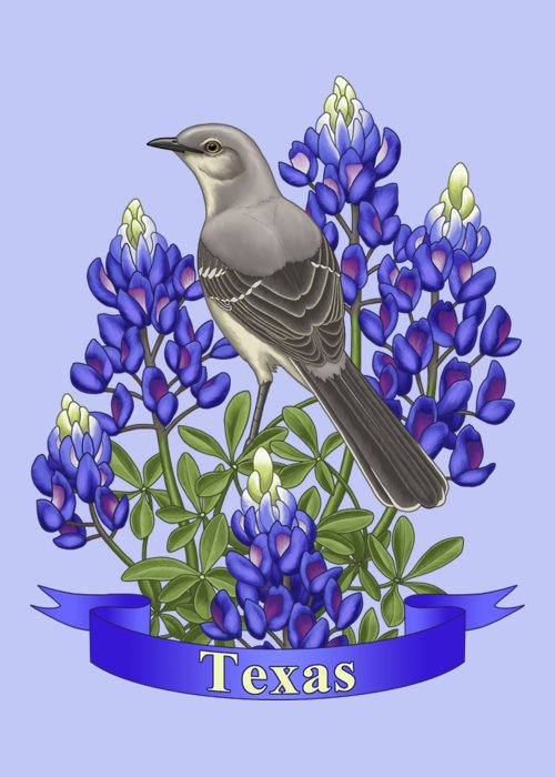 Texas State Mockingbird And Bluebonnet Flower Greeting Card For