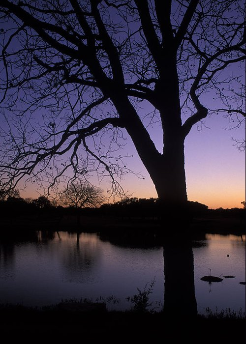 Trees Greeting Card featuring the photograph Texas Sunset On The Lake by Kathy Yates