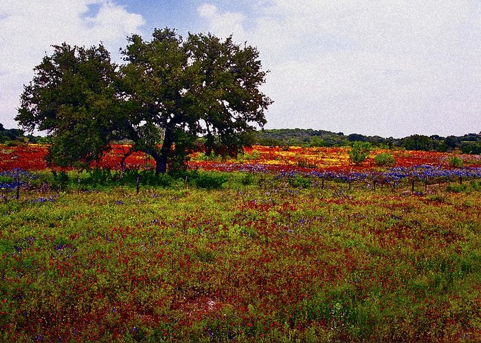 Texas Greeting Card featuring the photograph Texas Wildflowers by Tamyra Ayles