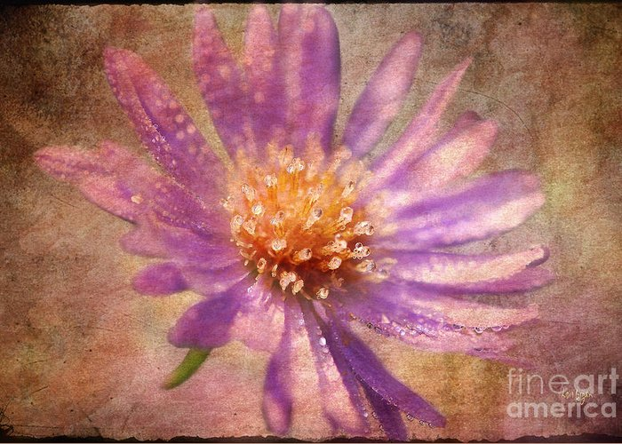 Asters Greeting Card featuring the photograph Textured Aster by Lois Bryan