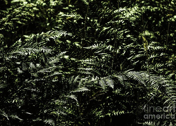 Green Greeting Card featuring the photograph Textures Of A Rainforest by Jorgo Photography - Wall Art Gallery