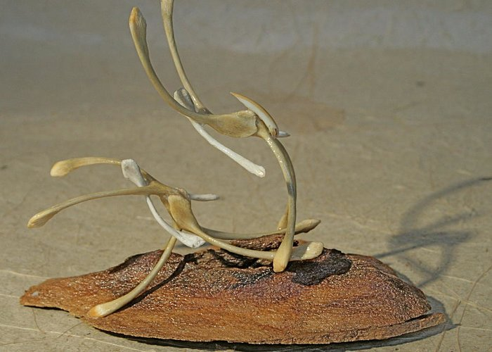 Wishbones Greeting Card featuring the sculpture The Acrobats by Ruth Edward Anderson