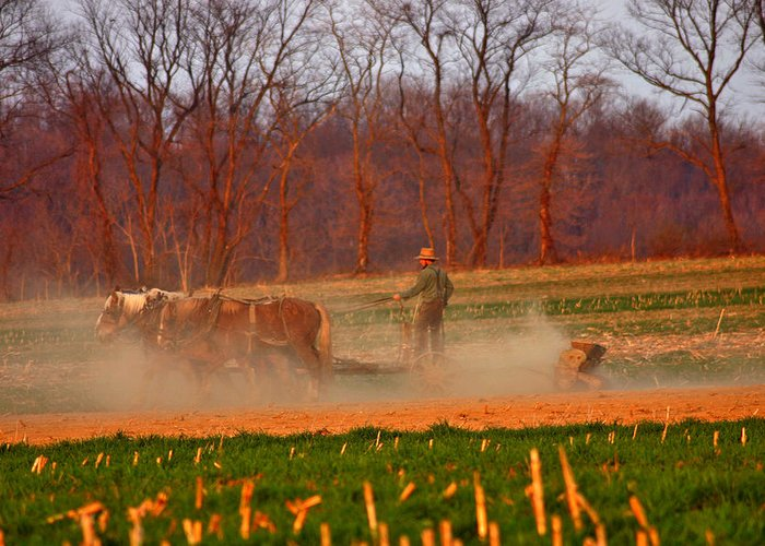 Amish Greeting Card featuring the photograph The Amish Way by Scott Mahon