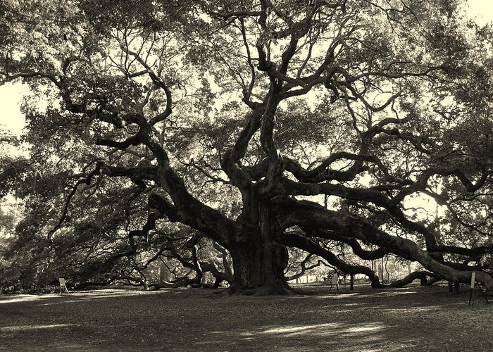 Angel Oak Greeting Card featuring the photograph The Angel Oak by Susanne Van Hulst