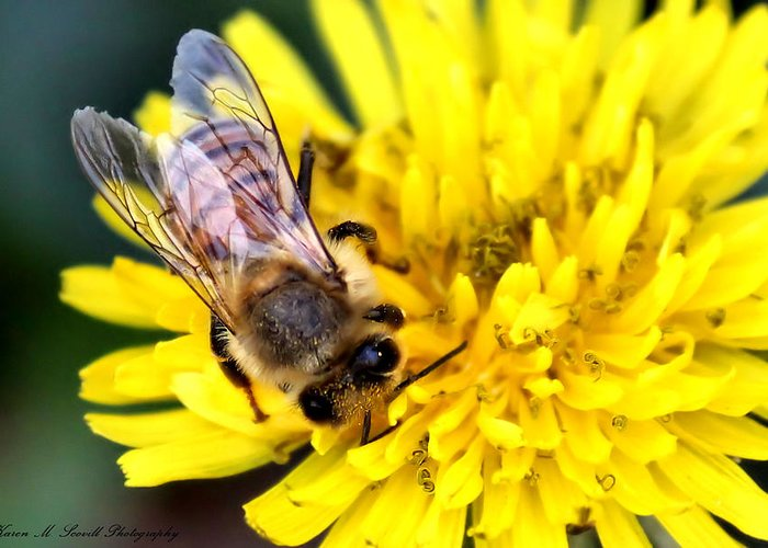 Macro Greeting Card featuring the photograph The Bee by Karen M Scovill