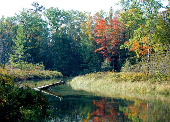 Landscape Greeting Card featuring the photograph The Beginning Of Fall by Jennifer Englehardt
