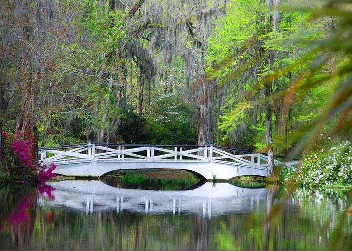 Photography Greeting Card featuring the photograph The Bridges In Magnolia Gardens by Susanne Van Hulst