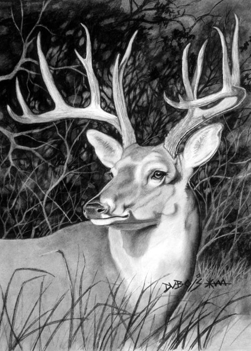 Deer Greeting Card featuring the drawing The Buck by Howard Dubois