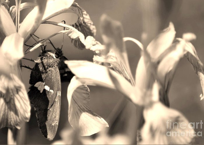 Fine Art Greeting Card featuring the photograph The Butterfly by Donna Greene