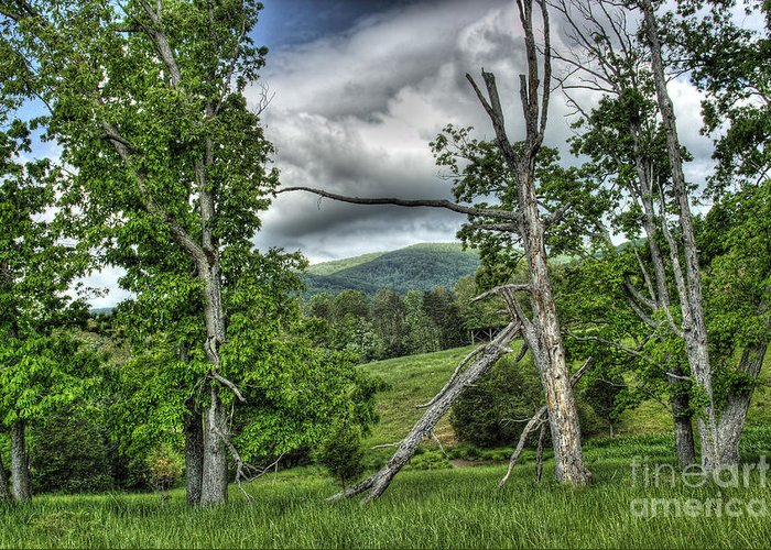 Virginia Greeting Card featuring the photograph The Buzzard Trees by Pete Hellmann