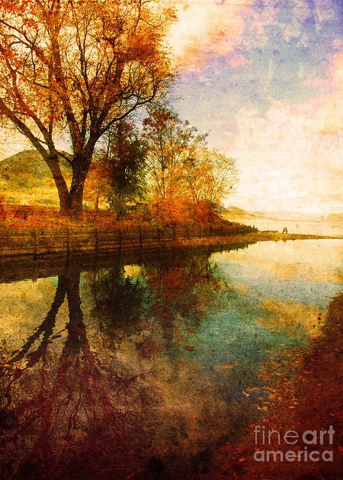 Calm Greeting Card featuring the photograph The Calm By The Creek by Tara Turner