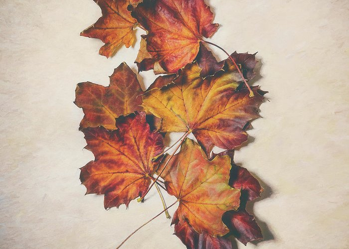 Late Fall Greeting Cards