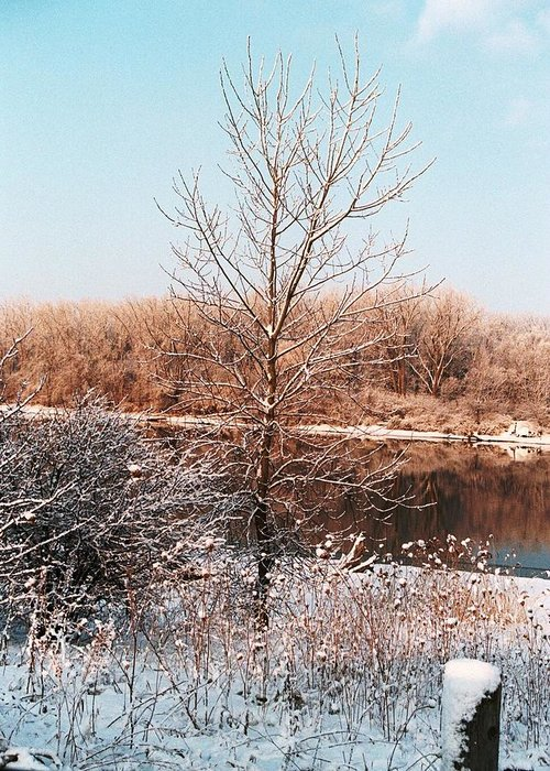 Tree Greeting Card featuring the photograph The Colors Of Winter by Jennifer Englehardt