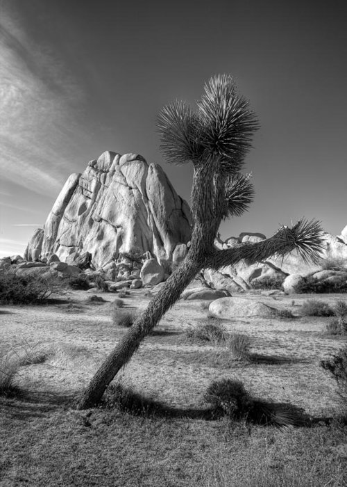 Desert Greeting Card featuring the photograph The Crooked Joshua Tree by Peter Tellone