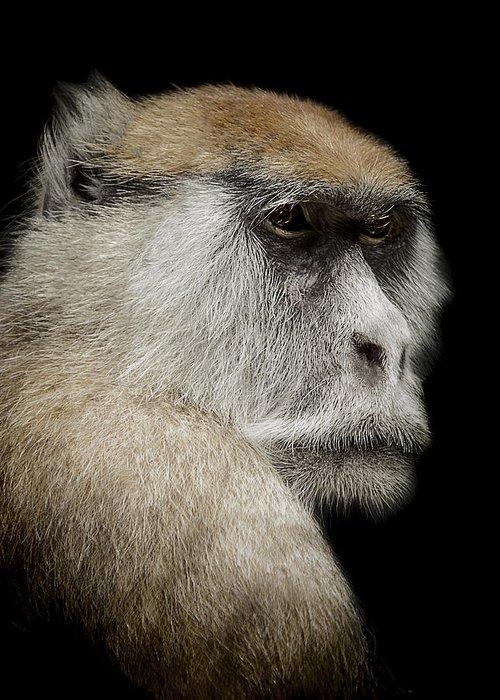 Patas monkey greeting cards fine art america patas monkey greeting cards m4hsunfo