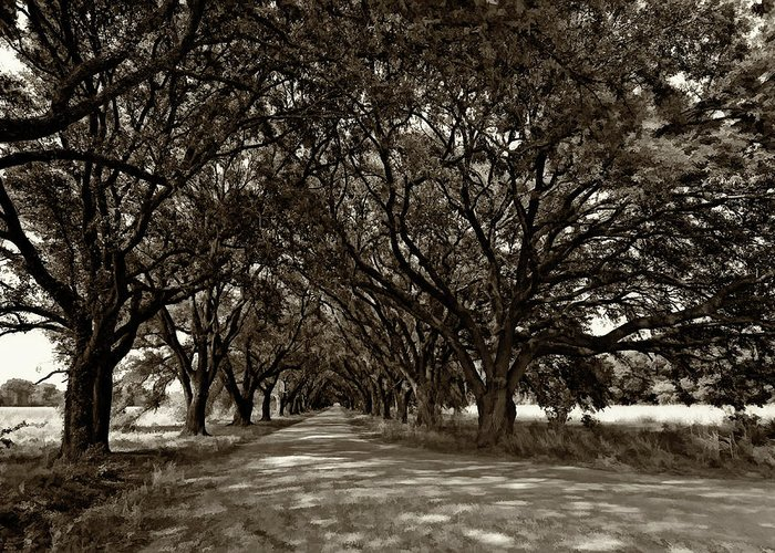 Evergreen Plantation Greeting Card featuring the photograph The Deep South Bw by Steve Harrington