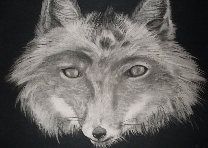 Fox Greeting Card featuring the drawing The Face Of A Fox by Samanta Munguia