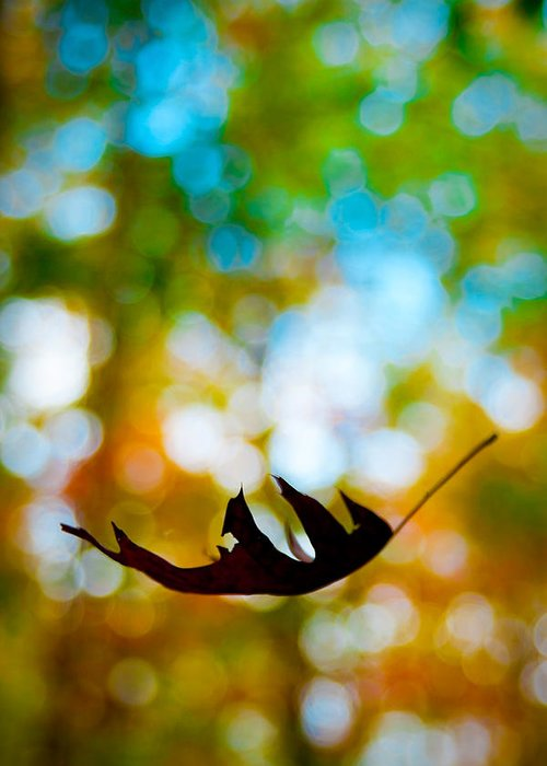 Forest Greeting Card featuring the photograph The Fall by Ryan Heffron