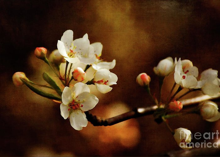 Cherry Trees Greeting Card featuring the photograph The Fleeting Sweetness Of Spring by Lois Bryan