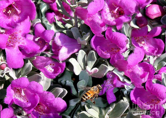 Nature Greeting Card featuring the photograph The Flight Of The Bumble Bee by Lucyna A M Green