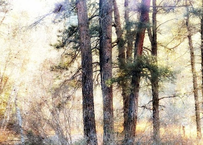 Forest Greeting Card featuring the photograph The Forest Speaks by Megan McFarland