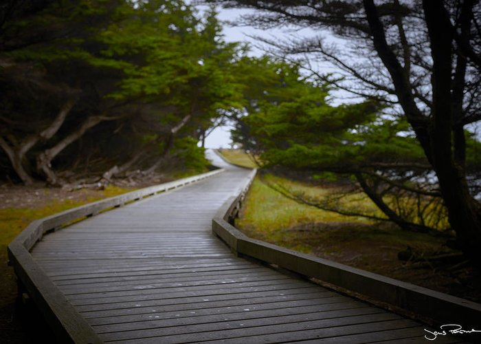 Boardwalk Greeting Card featuring the photograph The Fuzzy Path To Nowhere by Jens Peermann