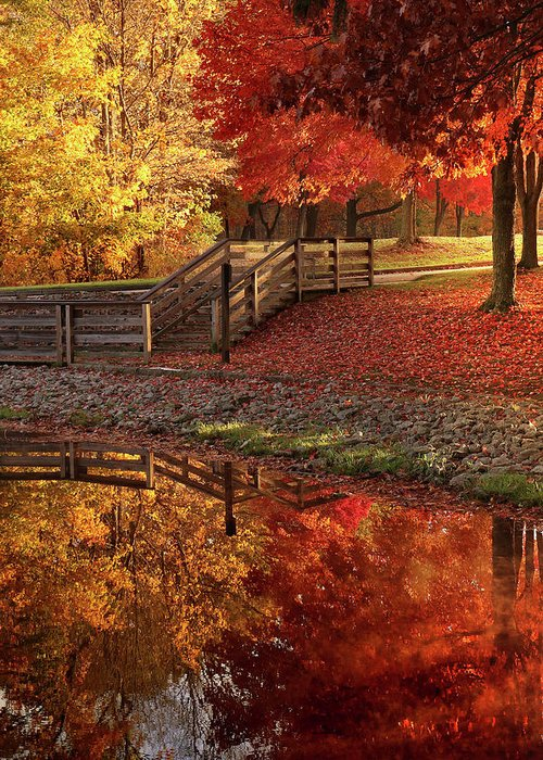 Greeting Card featuring the photograph The Glory Of Autumn by Rob Blair