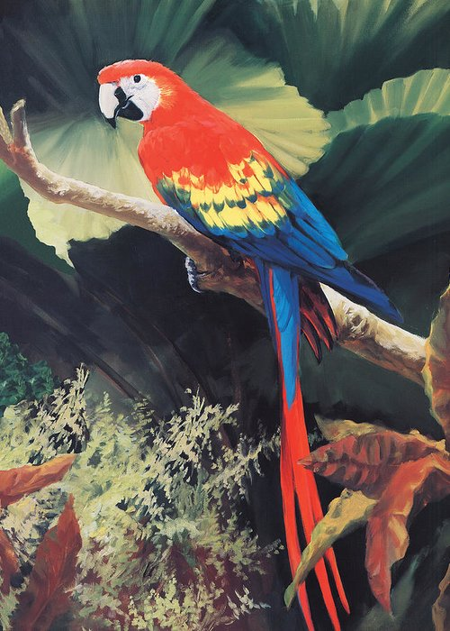Parrot Paintings Greeting Cards