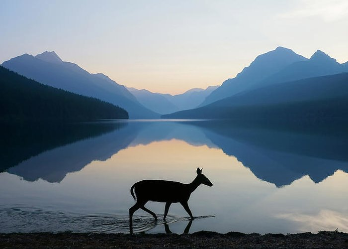 Deer Photographs Greeting Cards