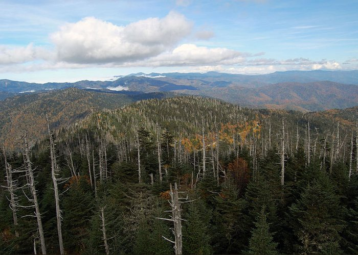 Tree Greeting Card featuring the photograph The Great Smoky Mountains 16 by Greg Straub