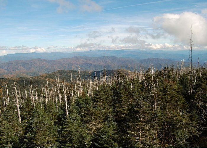 Tree Greeting Card featuring the photograph The Great Smoky Mountains 17 by Greg Straub