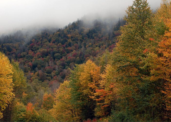 Tree Greeting Card featuring the photograph The Great Smoky Mountains 6 by Greg Straub