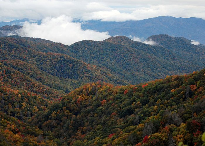 Tree Greeting Card featuring the photograph The Great Smoky Mountains 8 by Greg Straub