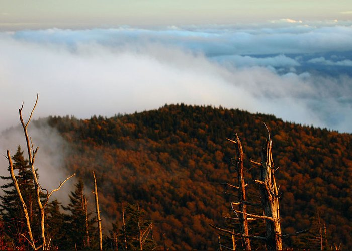 Tree Greeting Card featuring the photograph The Great Smoky Mountains 9 by Greg Straub
