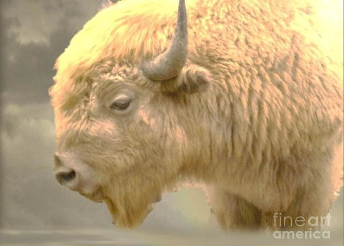 Buffalo Greeting Card featuring the photograph The Great White Buffalo by Marylyn Wiedmaier