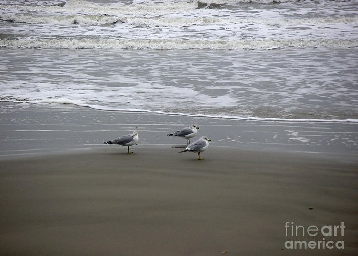 Nature Greeting Card featuring the photograph The Gulf In Shades Of Gray - Formation by Lucyna A M Green