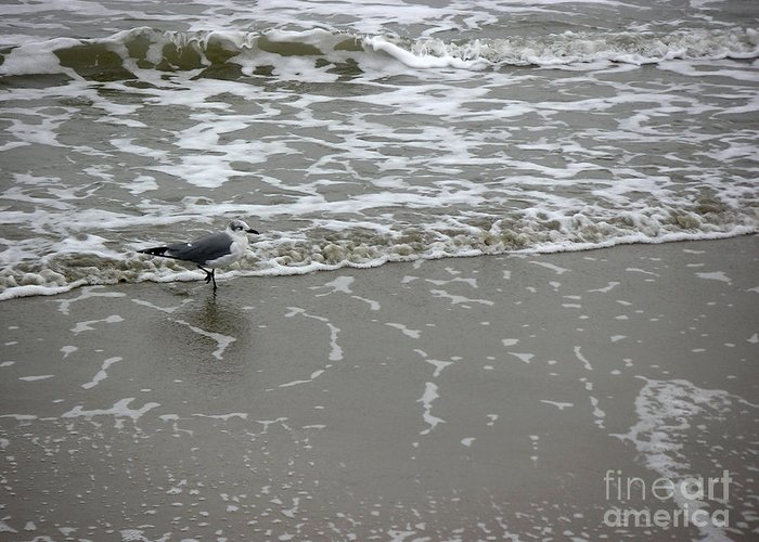 Nature Greeting Card featuring the photograph The Gulf In Shades Of Gray - On The Edge by Lucyna A M Green