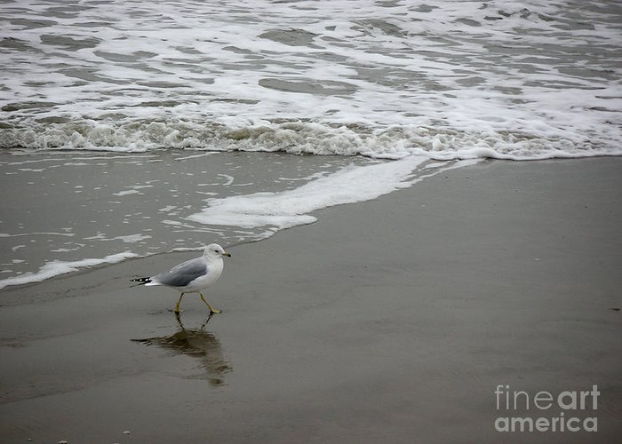 Nature Greeting Card featuring the photograph The Gulf In Shades Of Gray - Strutting by Lucyna A M Green
