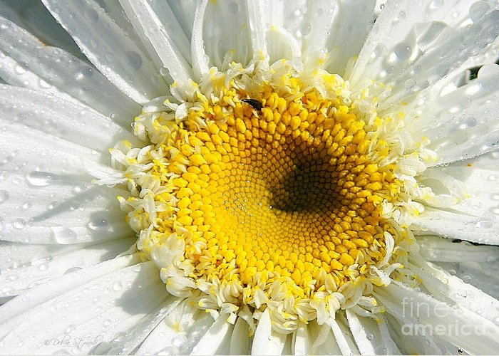 Daisy Greeting Card featuring the photograph The Heart Of A Daisy by Debra Straub