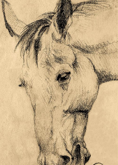 Animals Greeting Card featuring the drawing The Horse Portrait by Odon Czintos