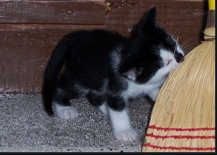 Kitten Greeting Card featuring the photograph The Kitten And The Broom by Michelle Miron-Rebbe