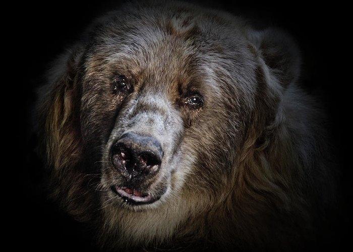 Kodiak Bear Greeting Card featuring the photograph The Kodiak Bear by Animus Photography