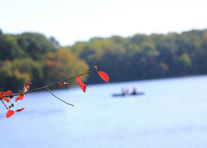 Greeting Card featuring the photograph The Lake by Tony Umana
