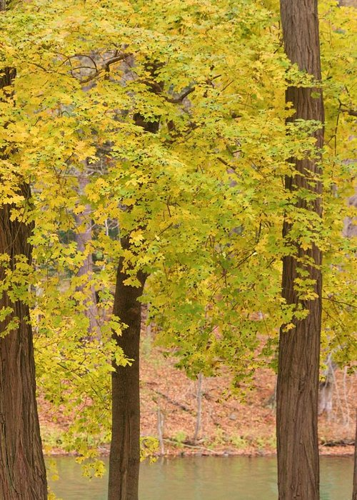 Autumn Greeting Card featuring the photograph The Last Holdouts by Jim Brady