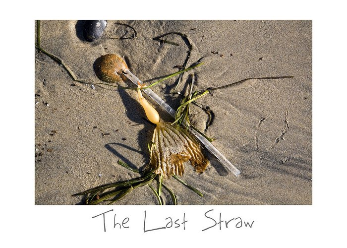 Beach Art Greeting Card featuring the photograph The Last Straw by Peter Tellone