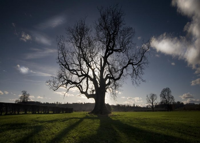 Oak Greeting Card featuring the photograph The Lonely Tree by Angel Tarantella