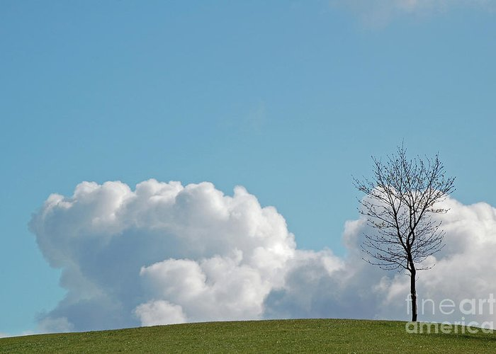 Lone Tree Greeting Card featuring the photograph The Lonely Tree by Mark Hughes