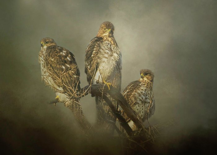 Hawk Greeting Card featuring the digital art The Lookouts by Nicole Wilde