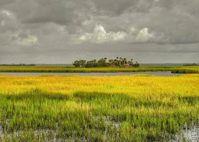 Marsh Greeting Card featuring the photograph The Lovely Low Country by Patricia Greer