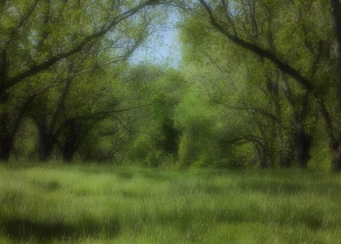 Landscape Greeting Card featuring the photograph The Meadow by Ayesha Lakes